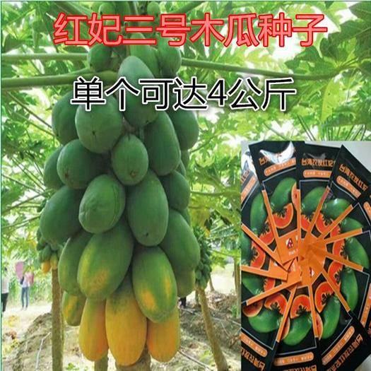 邵阳邵东县木瓜种子 300粒/包