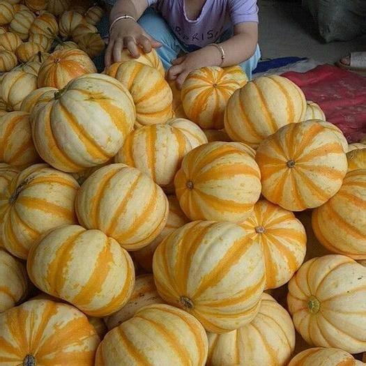 潍坊寿光市桔瓜 ,太阳瓜4-6两,5-8两,7-9两,大量现货