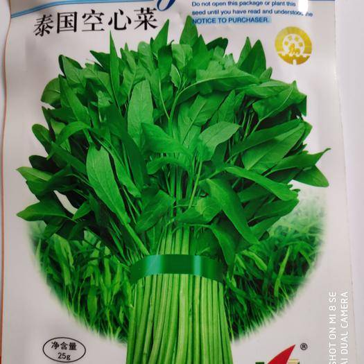 宿迁沭阳县空心菜种子 绿领泰国