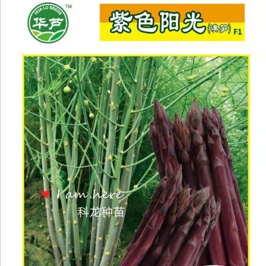 济南芦笋种子 袋装