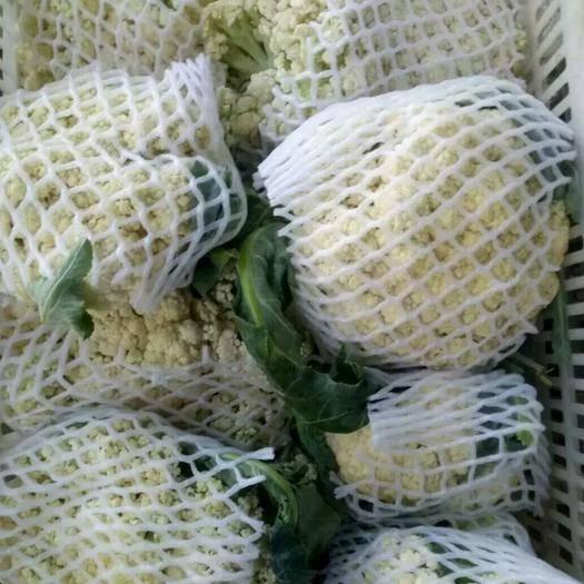 郯城县雪宝菜花 精品雪白花菜✔产地直销✔质量保证✔量大从优✔合作共赢✔
