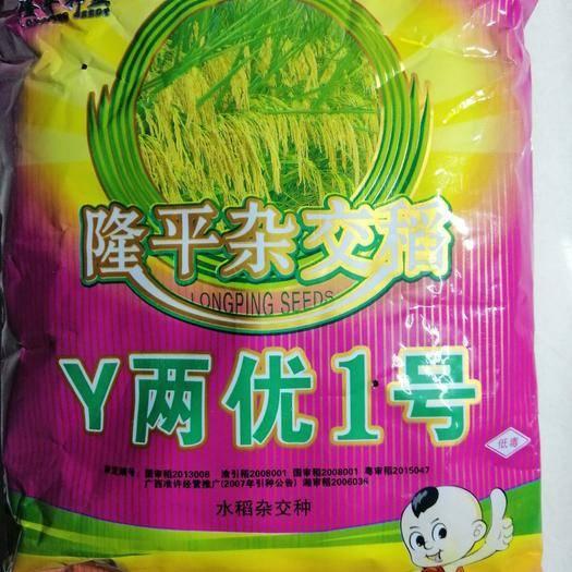黄冈英山县晶两优534水稻种子 隆平超级稻Y两优1号