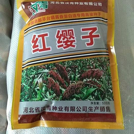 滄州青縣紅纓子高粱種子 雜交種 ≥90%