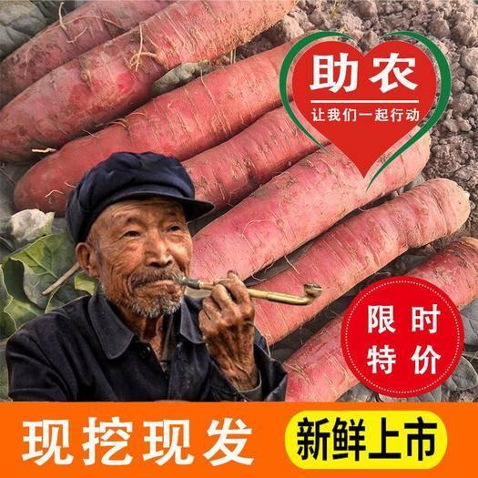 金華婺城區紅皮胡蘿卜 12.9元十斤包郵