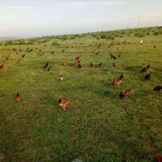卓資縣天然草地 出租 5~10年 1000~3000畝