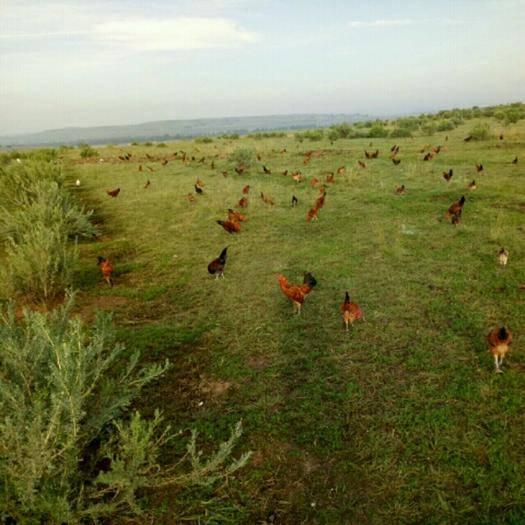 卓資縣生態園林 出租 5~10年 1000~3000畝