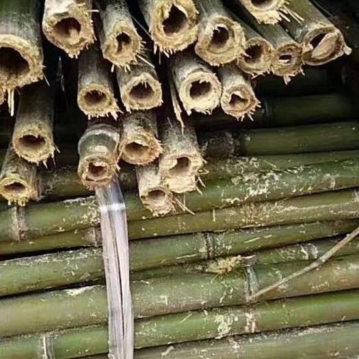 耒阳市菜架竹