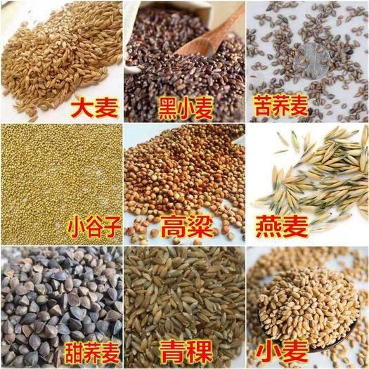 南昌南昌县荞麦种子 荞麦,黑小麦小麦大麦