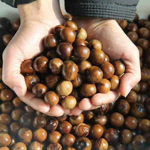宿迁沭阳县芡实种子 芡实苗子 苏芡 优质芡实种苗 鸡头米种子