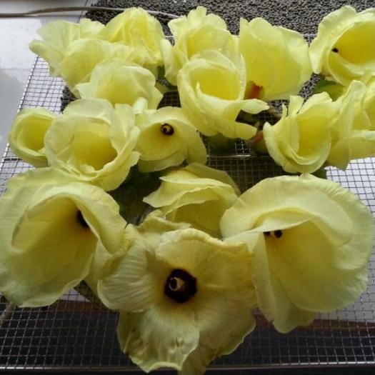 张掖高台县菜芙蓉种子 精品种子,金花葵种子 需要的联系   吆五吆零九三六五四六三