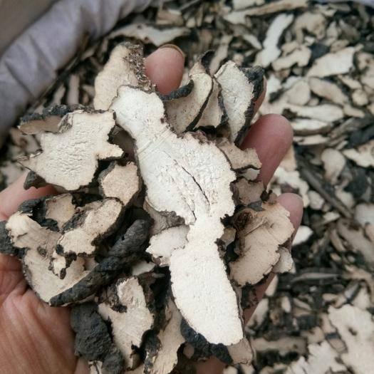 保定安國市豬苓 東北 產地直銷過篩 無硫熏 天然一公斤起包郵