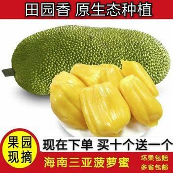 海南菠萝蜜 当季热带水果 果园直销 口感脆甜 一件代发【包邮】