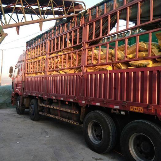 齐齐哈尔讷河市芽豆690 黄芽豆一五九零四六二二五     八八
