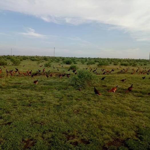 卓資縣山地 出租 5~10年 1000~3000畝