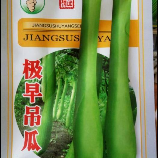 沭阳县吊瓜种子