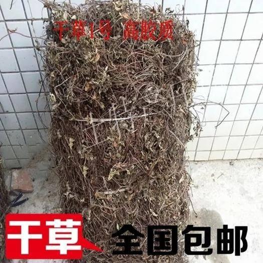 廣州增城區甜茶 涼粉草干王老吉原材料