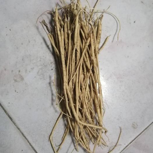 庆阳环县黄芪种苗