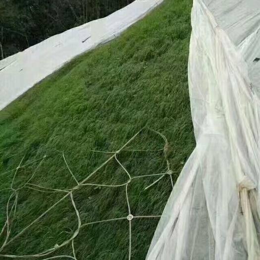 宿迁沭阳县护坡草种子