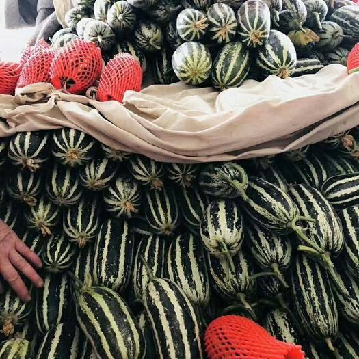 聊城莘縣博洋9號甜瓜 羊角蜜91 對接商超批發市場客戶,訂單種植