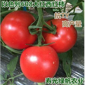 红果番茄种子 ≥98% 常规种 ≥85%