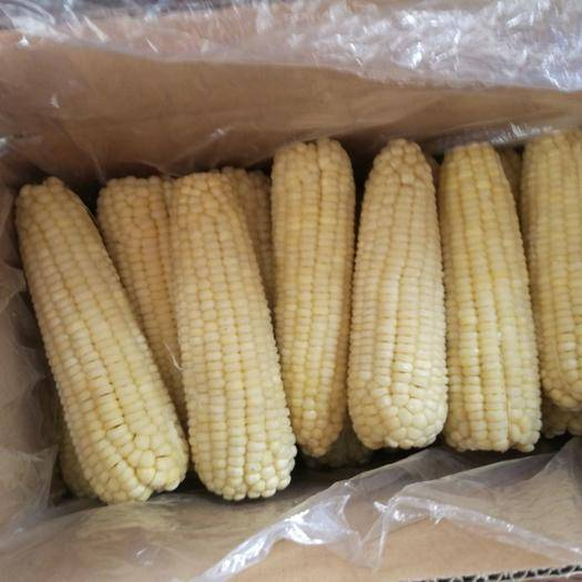 抚顺速冻糯玉米 12-18个月