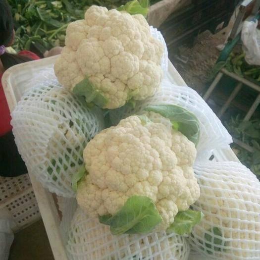 通许县白花菜花 2~3斤 紧密