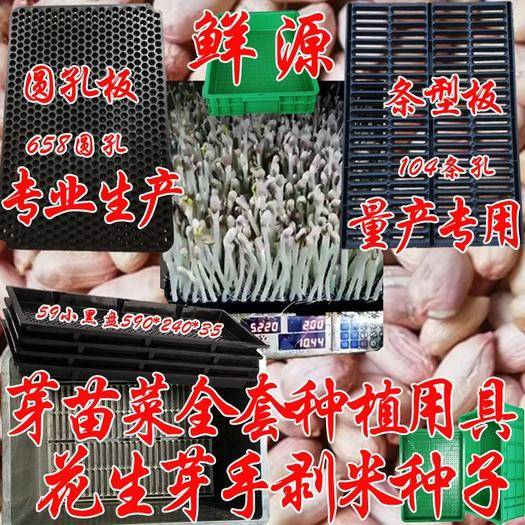 郴州豌豆苗 人工种植 混装通货