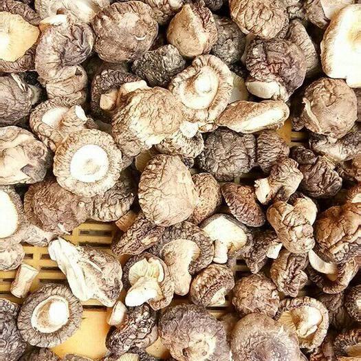 湖北省随州市曾都区干草菇 产地优质光面菇