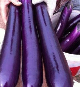 茄子种子 亮度好 肉质软细腻 优质品种