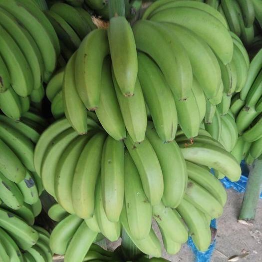 邯鄲臨漳縣 (正常發貨)廣西新鮮農家香蕉新鮮水果 現采現摘鮮蕉 新鮮包郵
