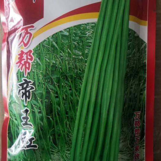南阳卧龙区油青豆角种子 万帮帝王豇400g/袋/48元