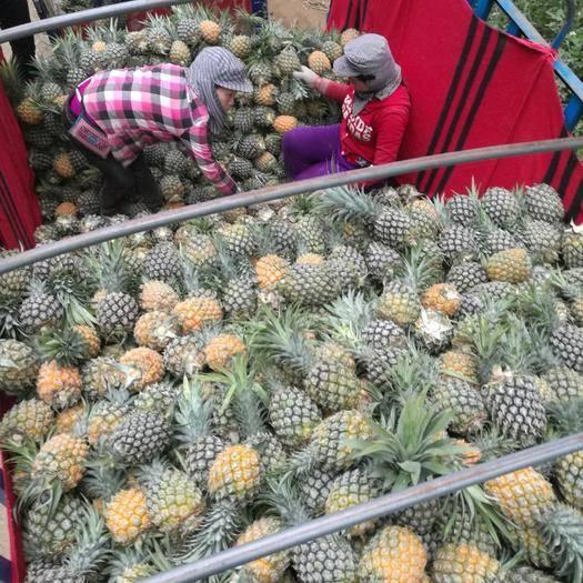红河河口瑶族自治县河口香蕉 七成熟