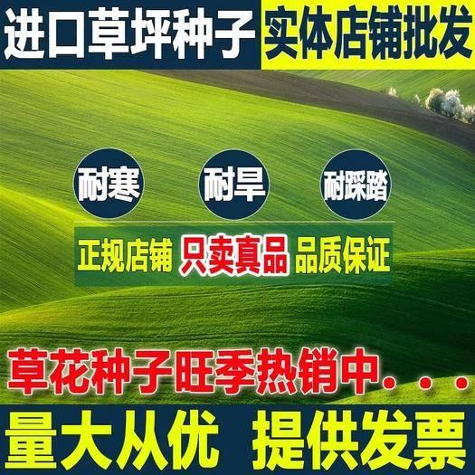 苏州吴江区百喜草种子