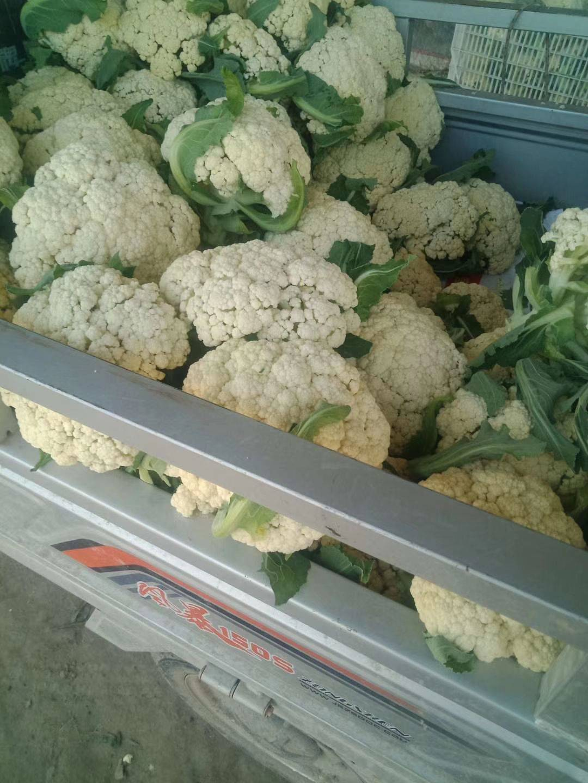 松花菜 松散 2~3斤