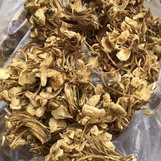 達州通川區黃金針菇 干