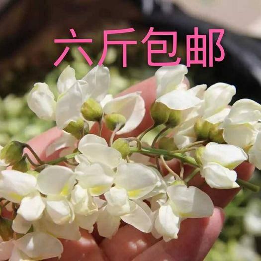 洛陽伊川縣槐花