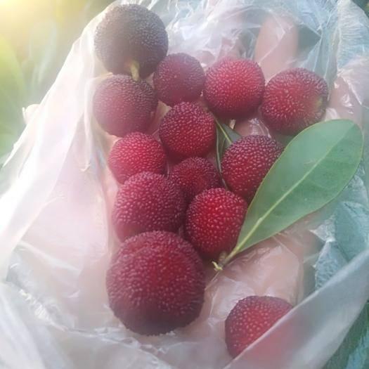 紅河石屏縣早色楊梅 1 - 1.5cm
