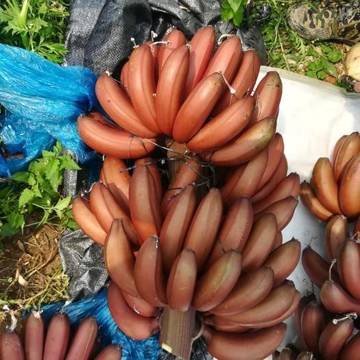 南宁红蕉 七成熟
