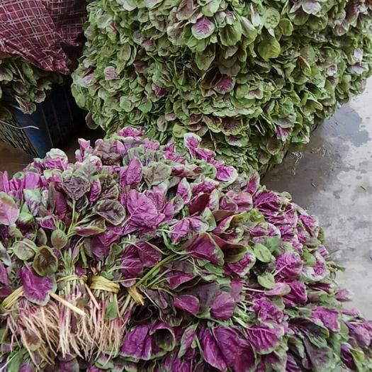 襄樊襄州区红苋菜 25-30cm 紫红