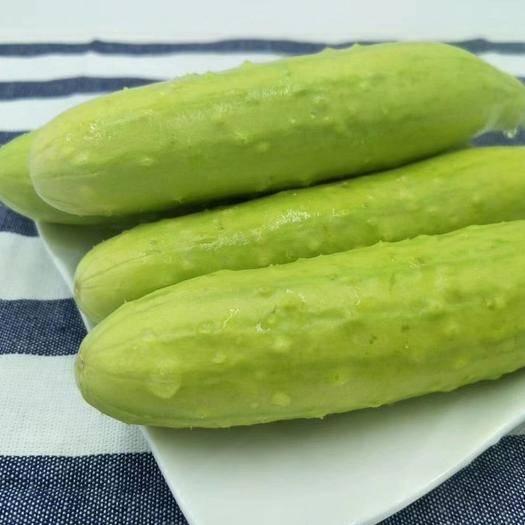 烟台海阳市 5斤20根左右海阳白玉黄瓜,顺丰包邮,现货秒发