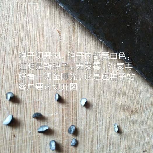 曹县 芦笋种子