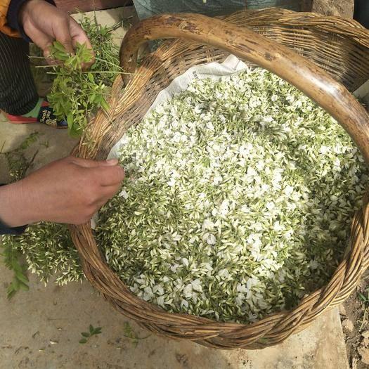 渭南华州区槐树花 鲜货