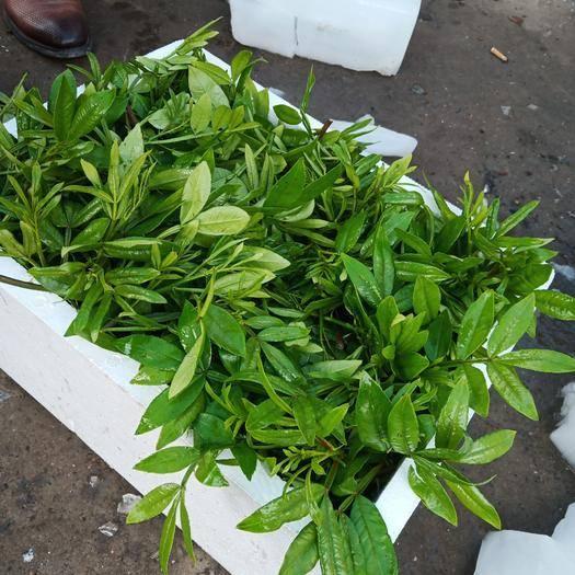 四川省达州市大竹县花椒芽 人工种植 5-10cm