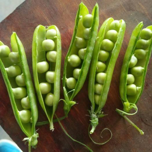 襄樊 青豌豆預售,4月上旬上市