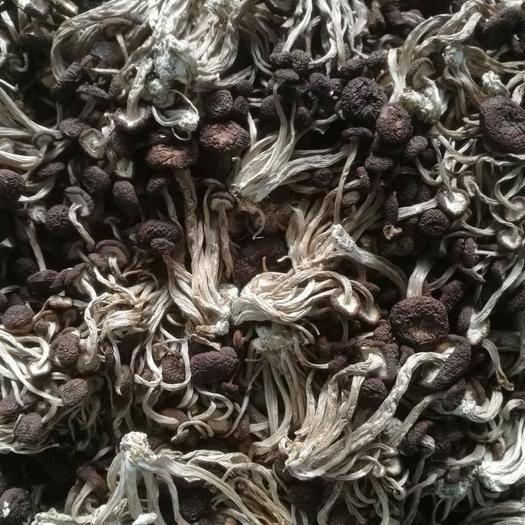 抚州南丰县广昌5号茶树菇 散装   规格私人定制   包邮