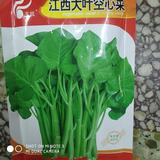 武汉武昌区空心菜种子
