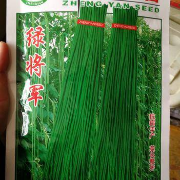 郑研种苗 绿将军青条豆角种子 抗病丰产 夹长整齐 200克