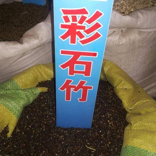 沧州献县石竹种子