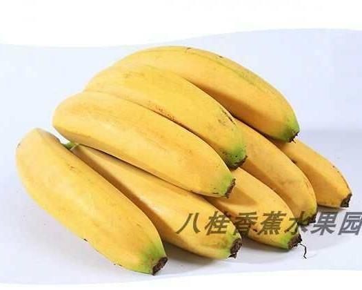南宁西乡塘区威廉斯香蕉 八成熟