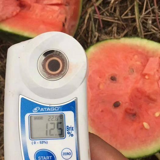 濰坊寒亭區 本西瓜產區大量供應各種西瓜